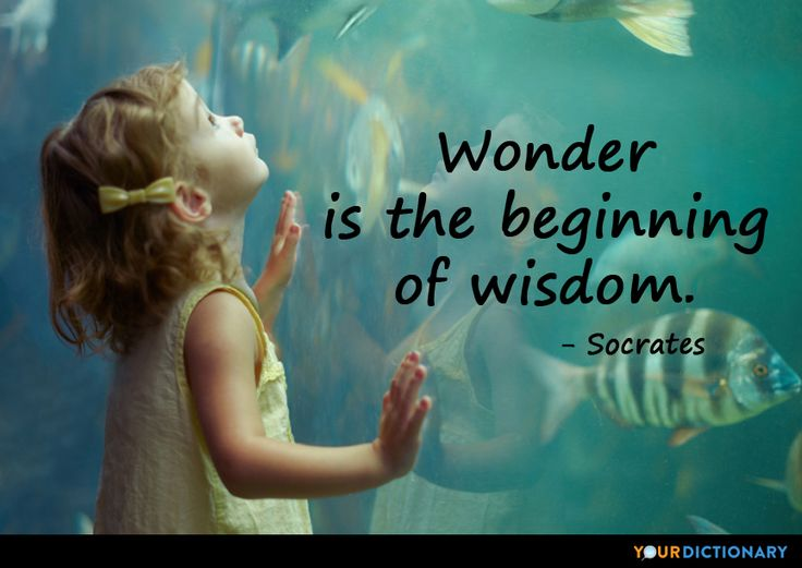 wisdom and the wise man socrates Wisdom quotes collections is collections of the most powerful quotes showing the wisdom of the ancient polymaths all these wisdom quotes and stories are wise words quotes which will inspire you and live with motivation.