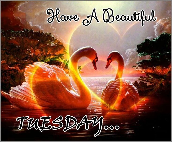 Tuesday Quotes Good Morning Sister And All Wish You A Lovely