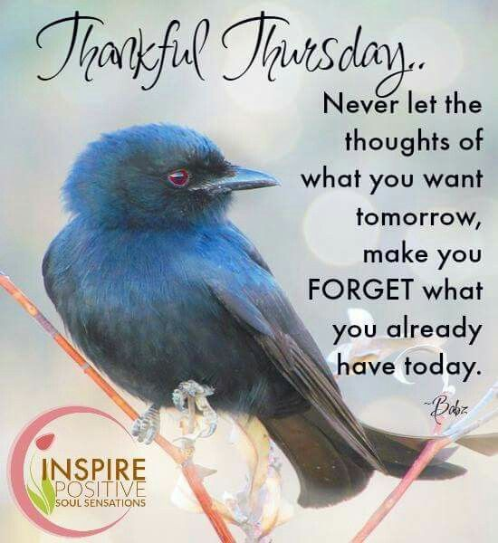 Tuesday Quotes Thankful Thursday Quotesstorycom Leading