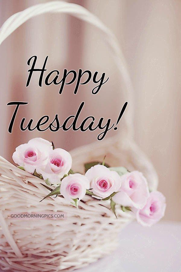 Tuesday Quotes Good Morning Happy Tuesday Quotesstorycom