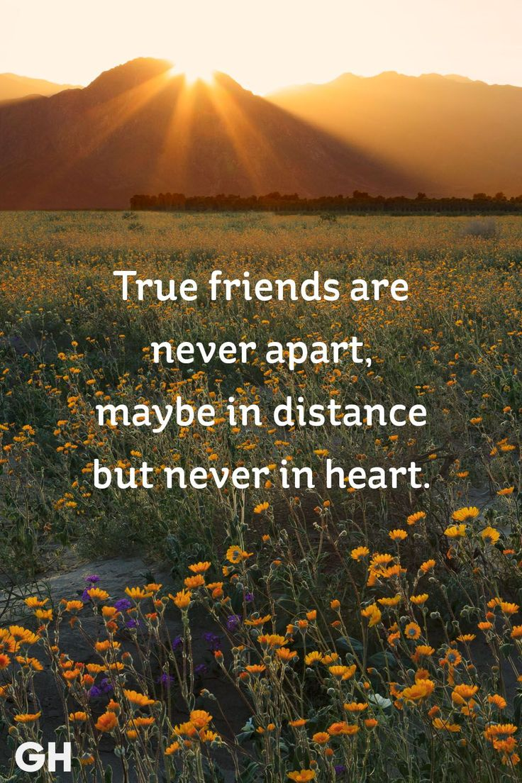 Friendship Quotes : 20 Short Friendship Quotes to Share With ...
